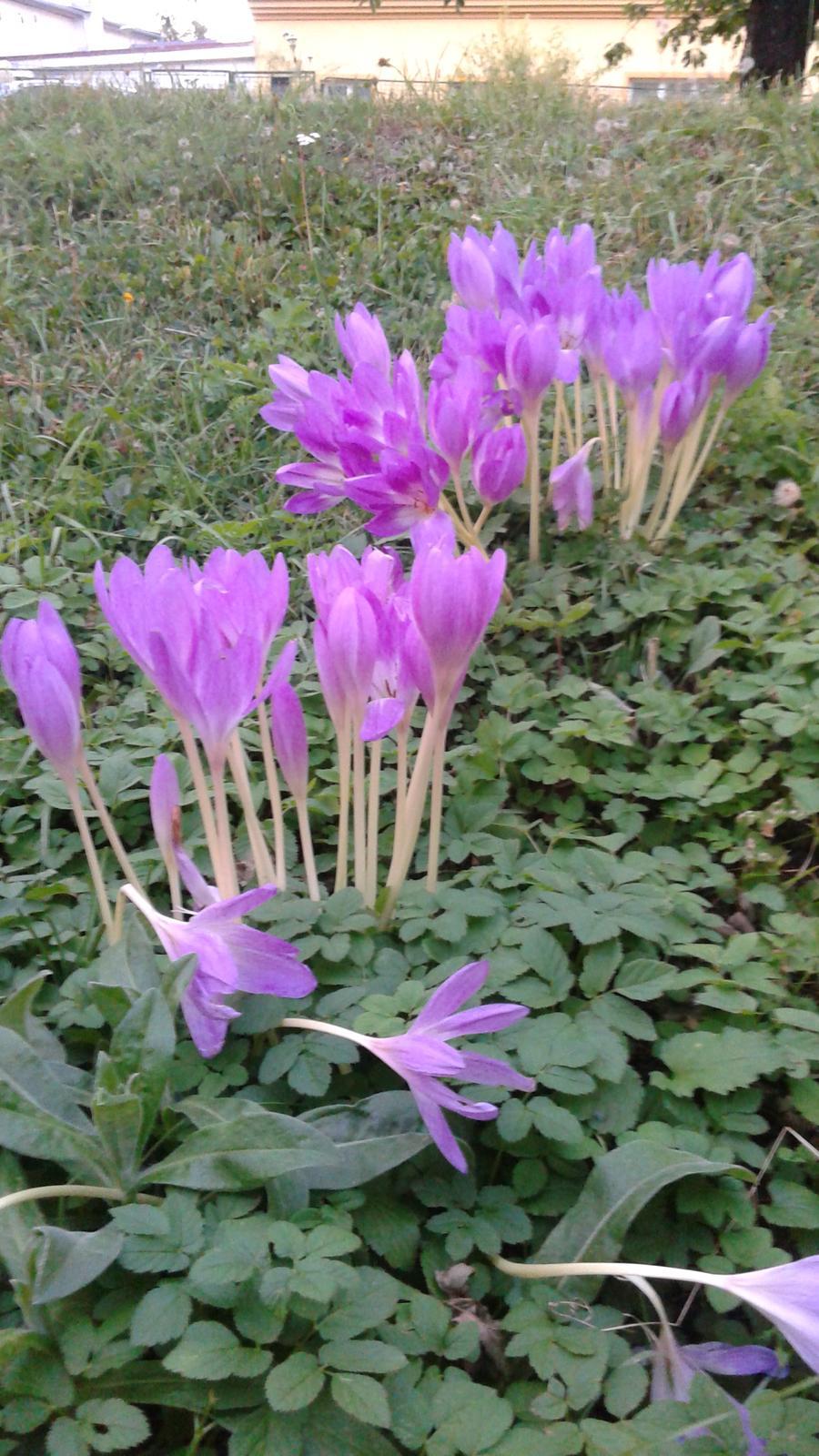Zahrada od začátku - Obrázek č. 36
