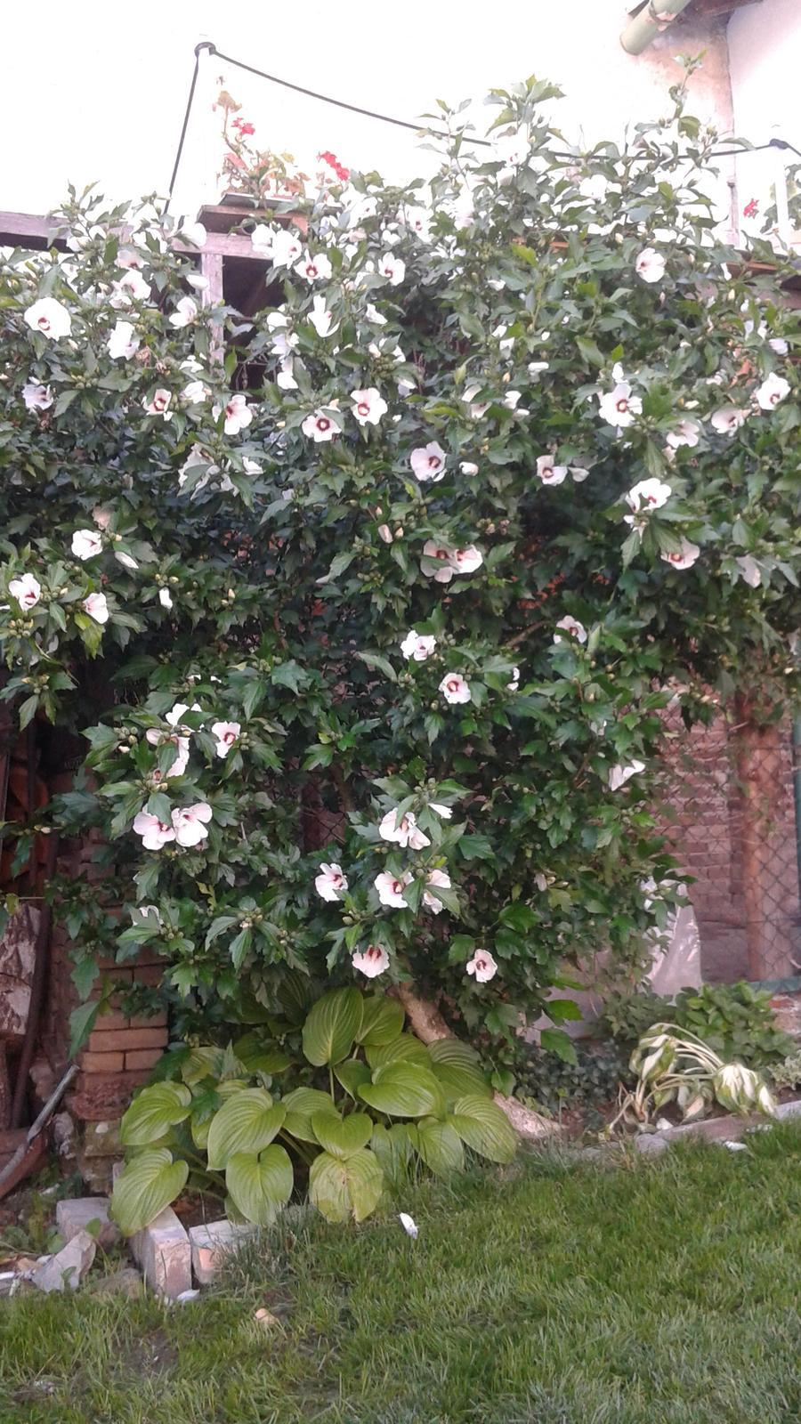 Zahrada od začátku - Obrázek č. 62