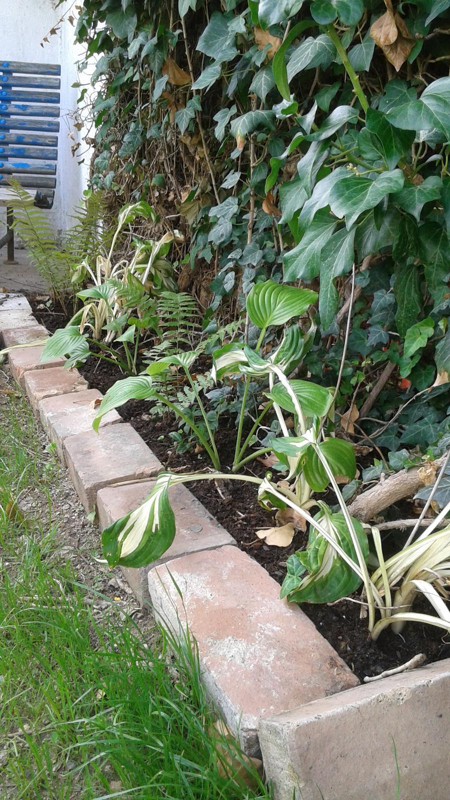 Zahrada od začátku - Obrázek č. 46
