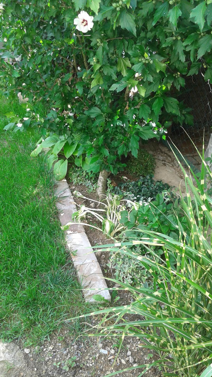 Zahrada od začátku - a ještě lepší! :-)