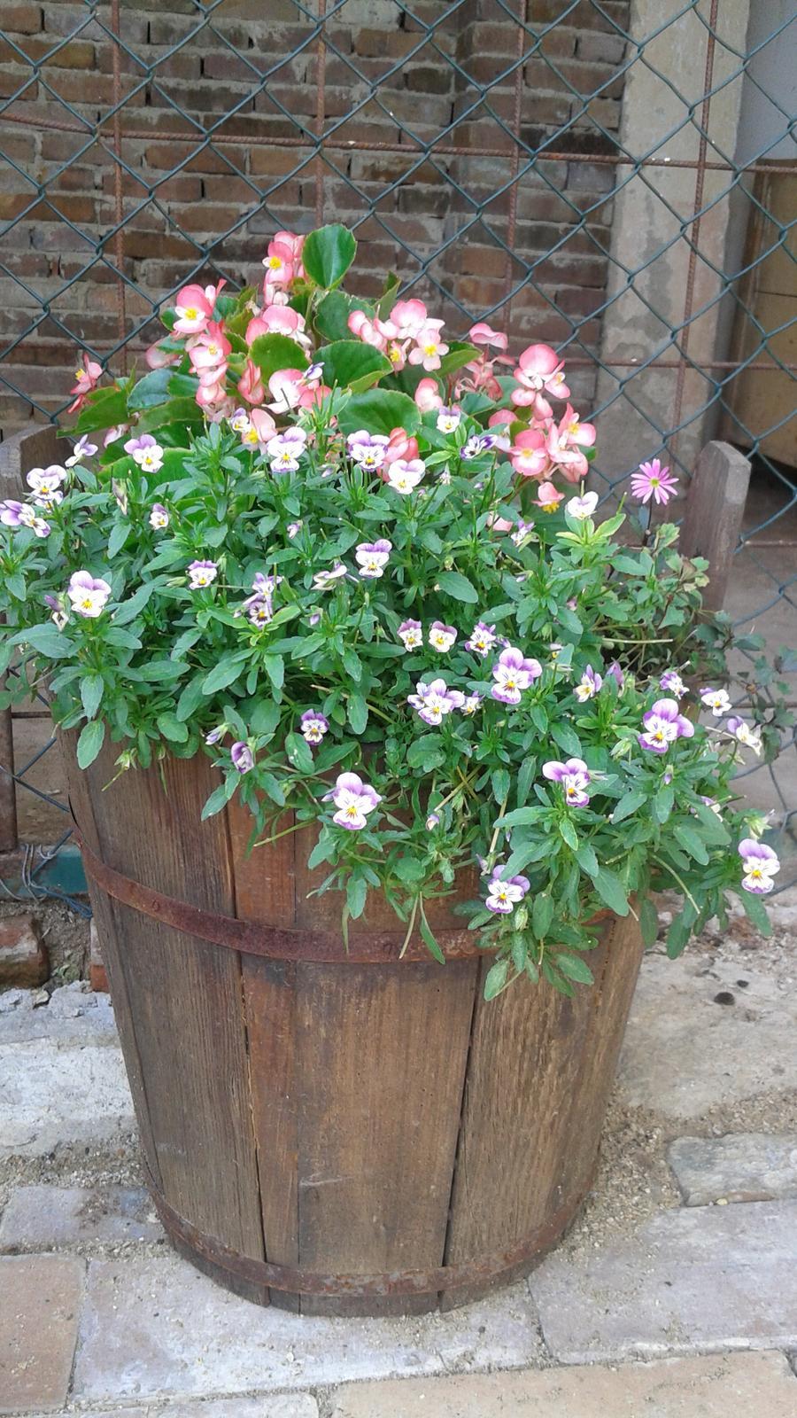 Zahrada od začátku - Obrázek č. 54