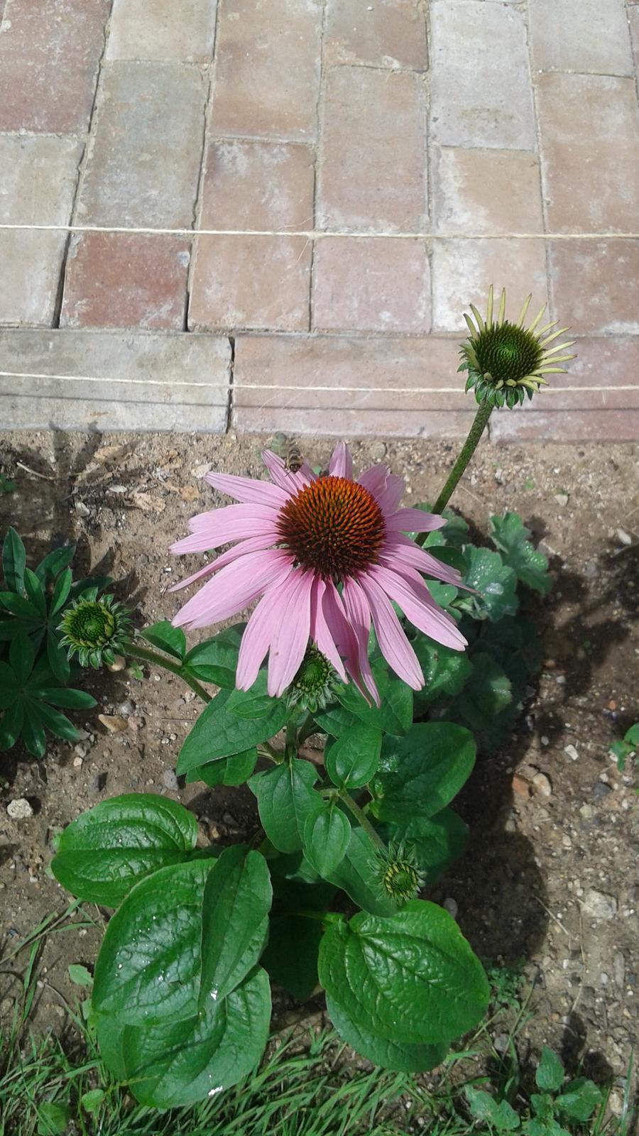 Zahrada od začátku - Obrázek č. 55