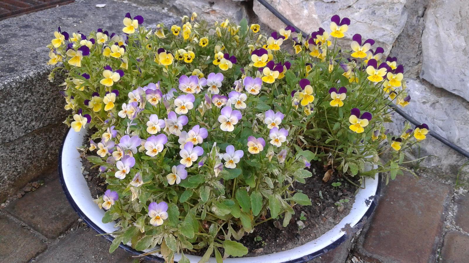 Zahrada od začátku - Obrázek č. 57
