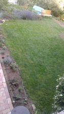 tráva po měsíci :-)