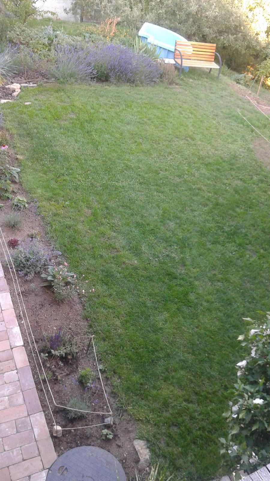 Zahrada od začátku - tráva po měsíci :-)