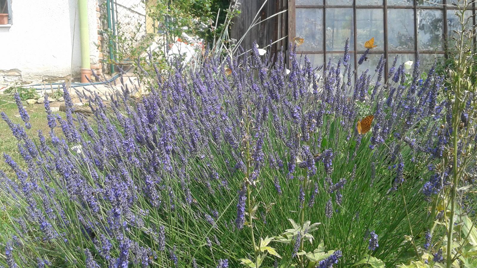 Zahrada od začátku - Obrázek č. 61
