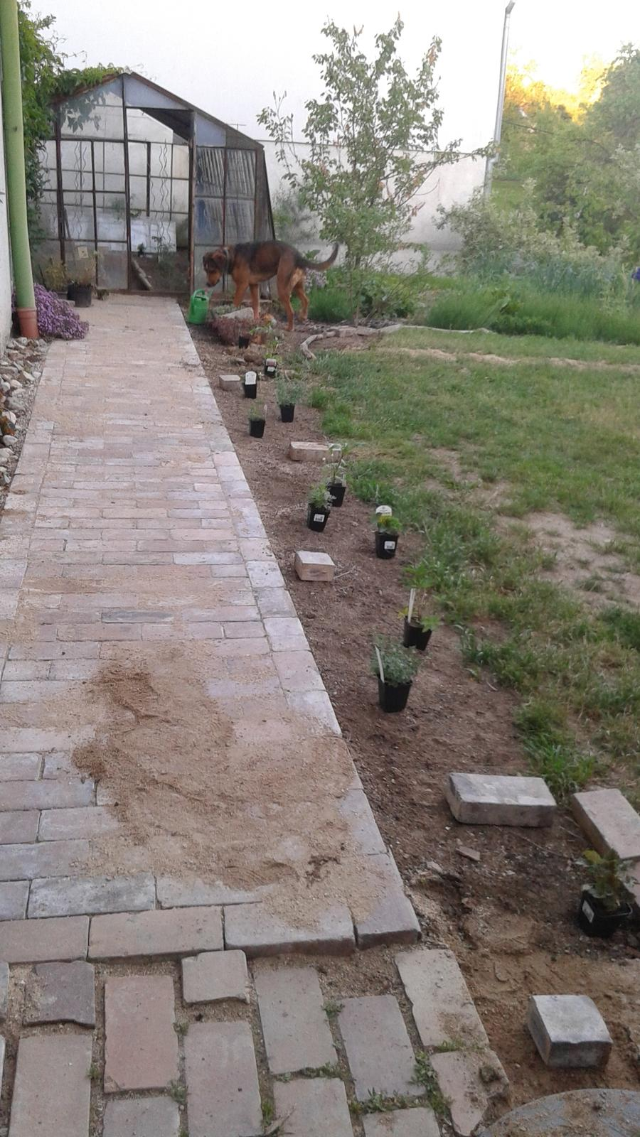 Zahrada od začátku - Obrázek č. 48