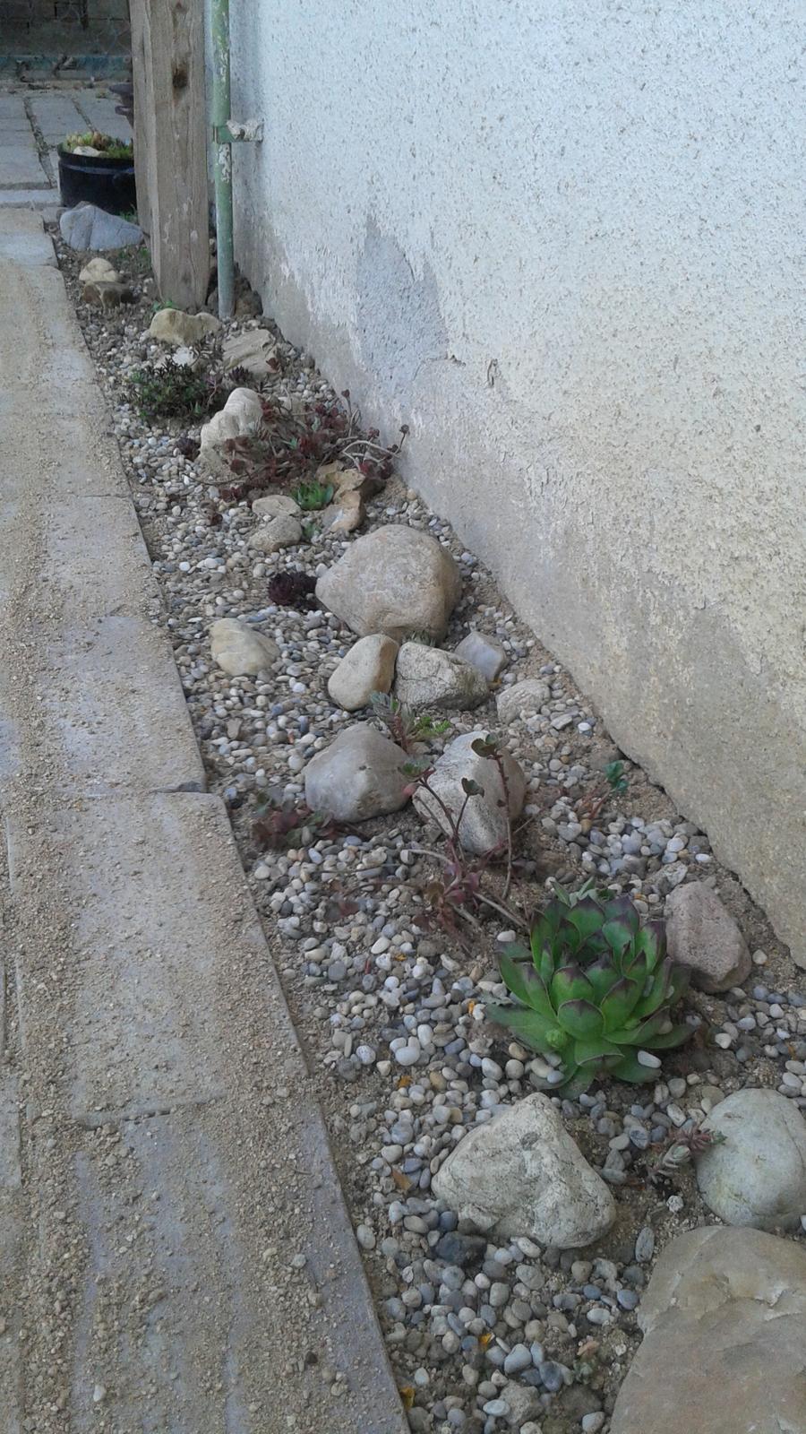 Zahrada od začátku - Obrázek č. 51