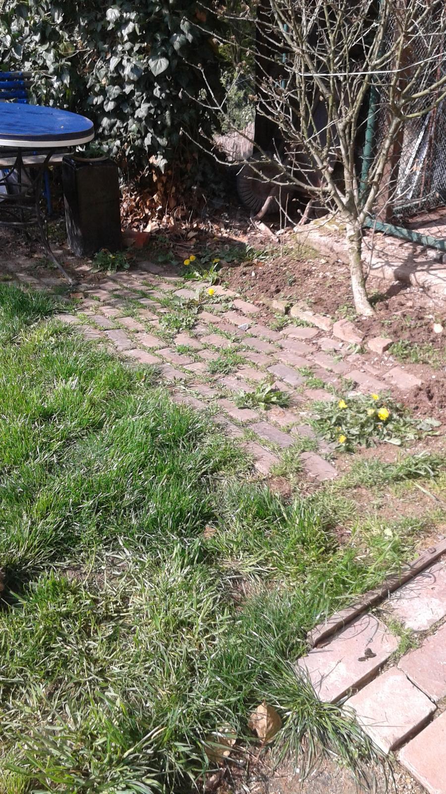 Zahrada od začátku - stav v květnu