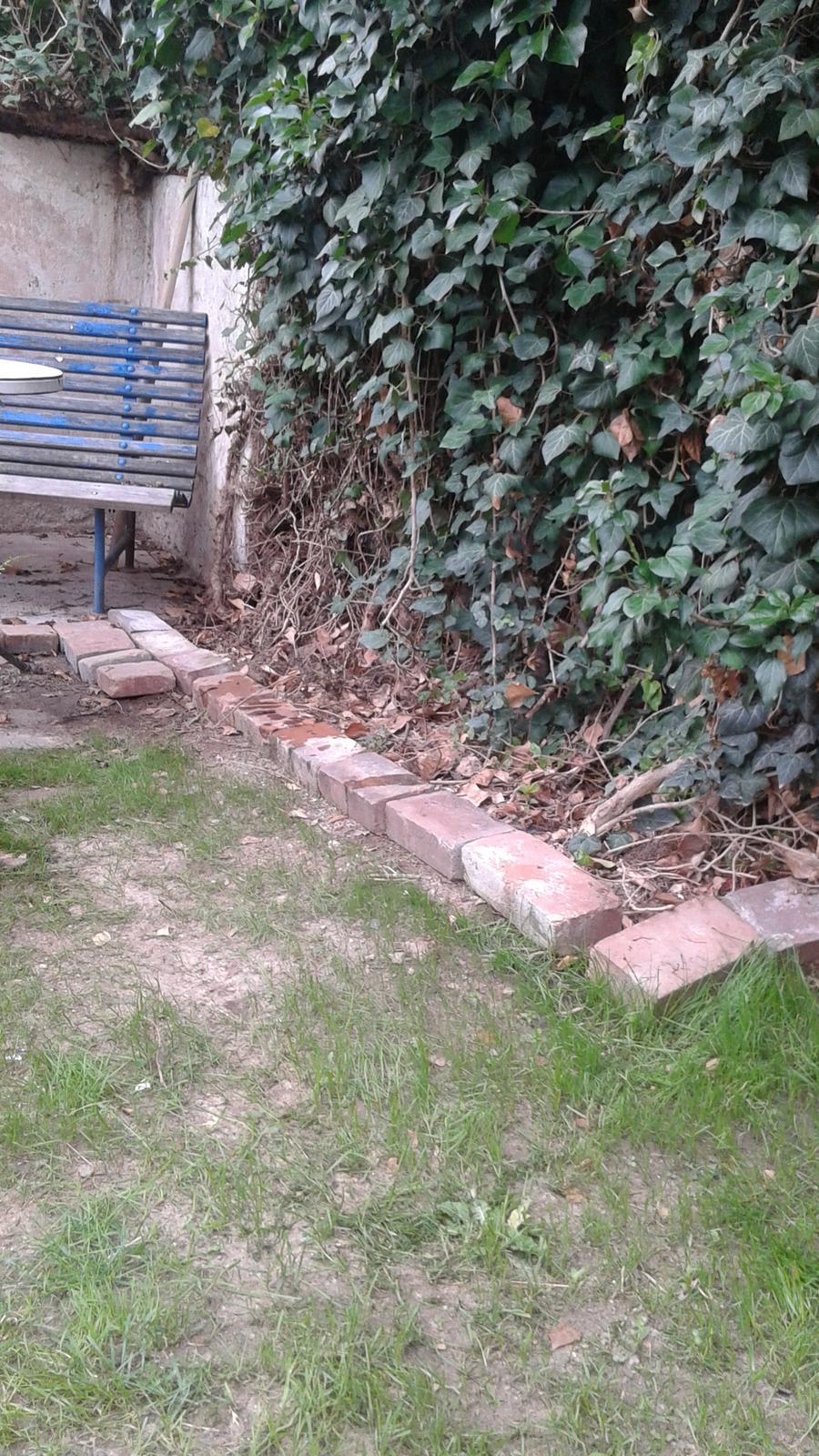 Zahrada od začátku - Obrázek č. 45