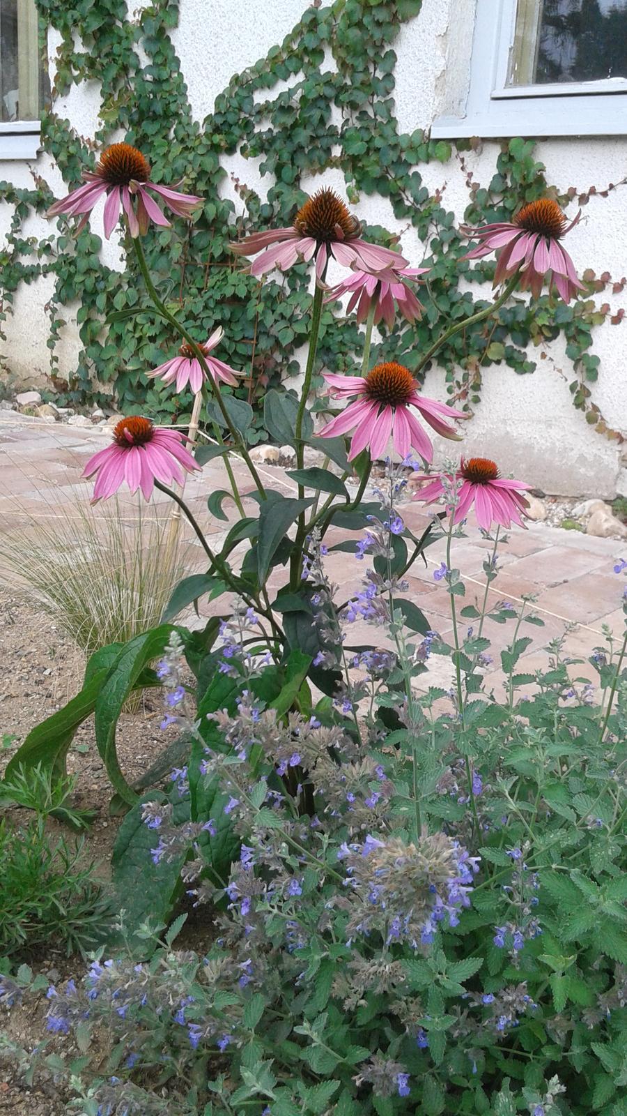 Zahrada od začátku - Obrázek č. 64