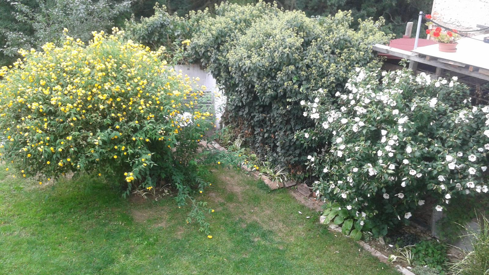 Zahrada od začátku - Obrázek č. 65