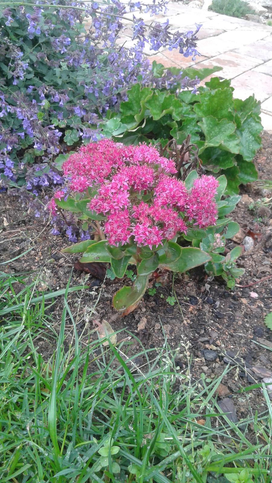 Zahrada od začátku - Obrázek č. 67