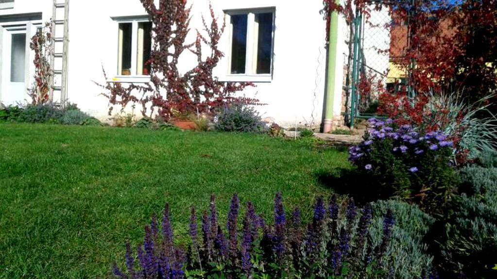 Zahrada od začátku - Obrázek č. 71