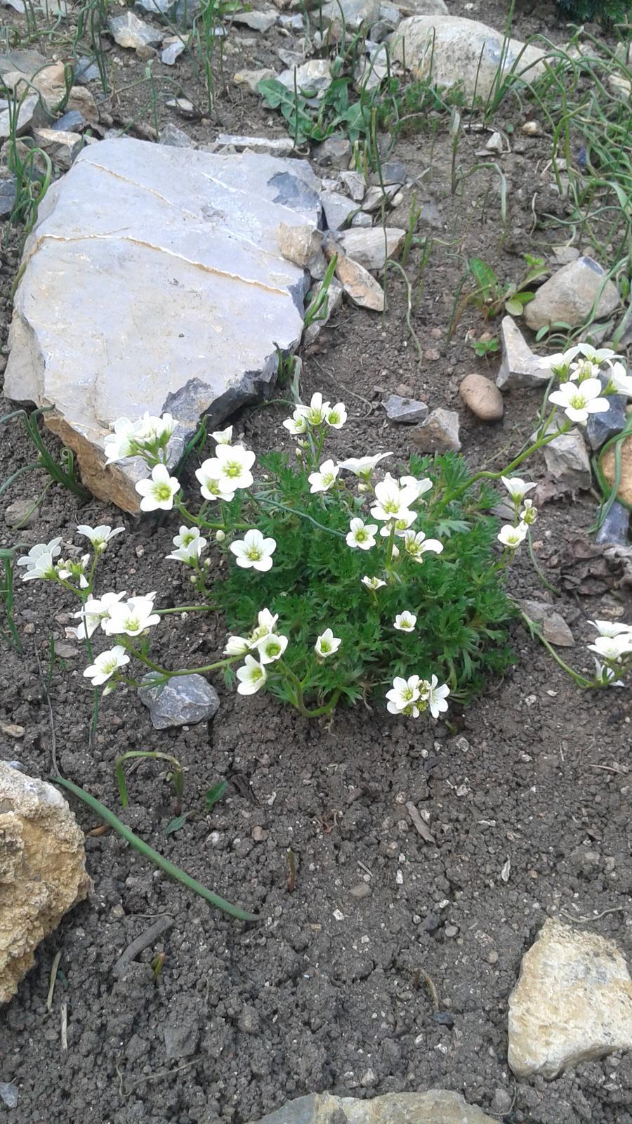 Zahrada od začátku - Obrázek č. 75