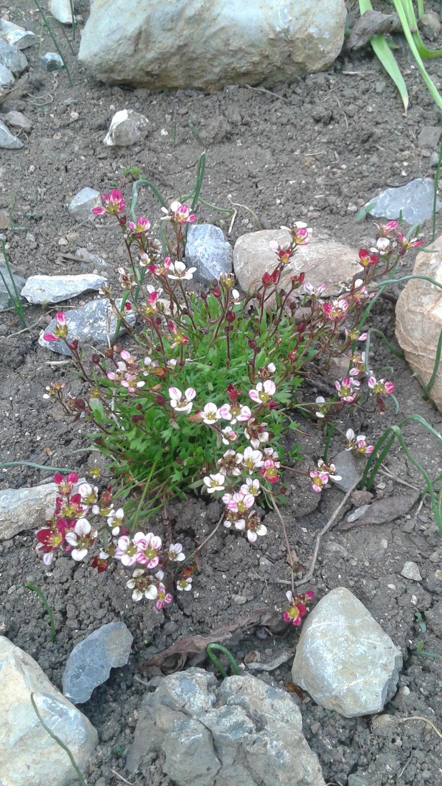 Zahrada od začátku - Obrázek č. 76