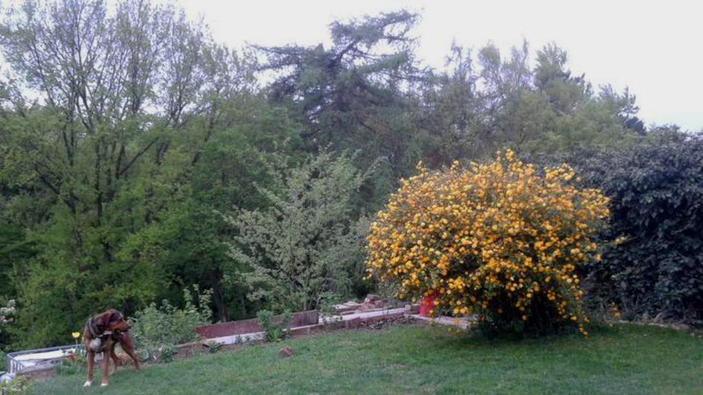 Zahrada od začátku - Obrázek č. 90