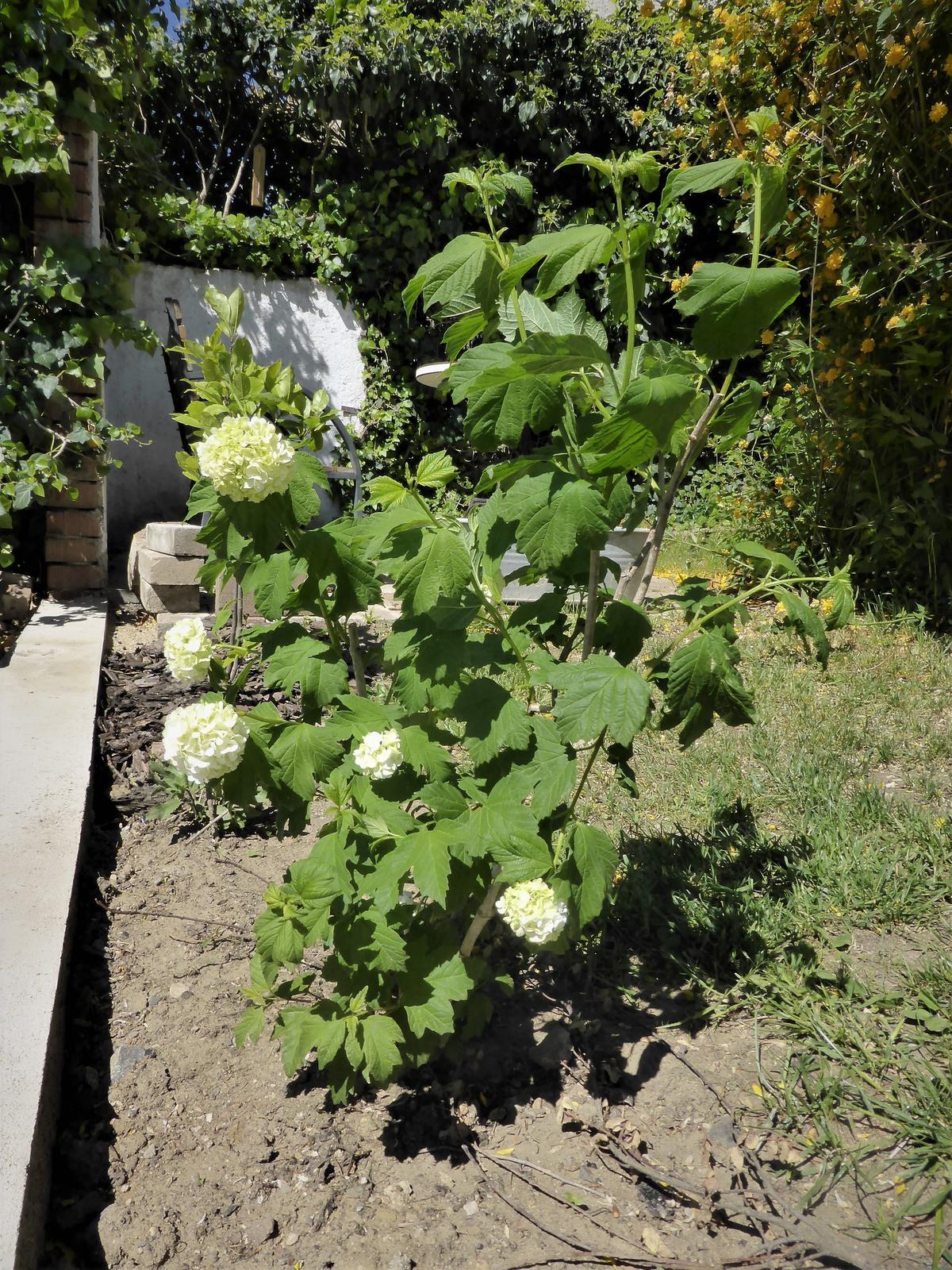 Zahrada od začátku - Obrázek č. 93