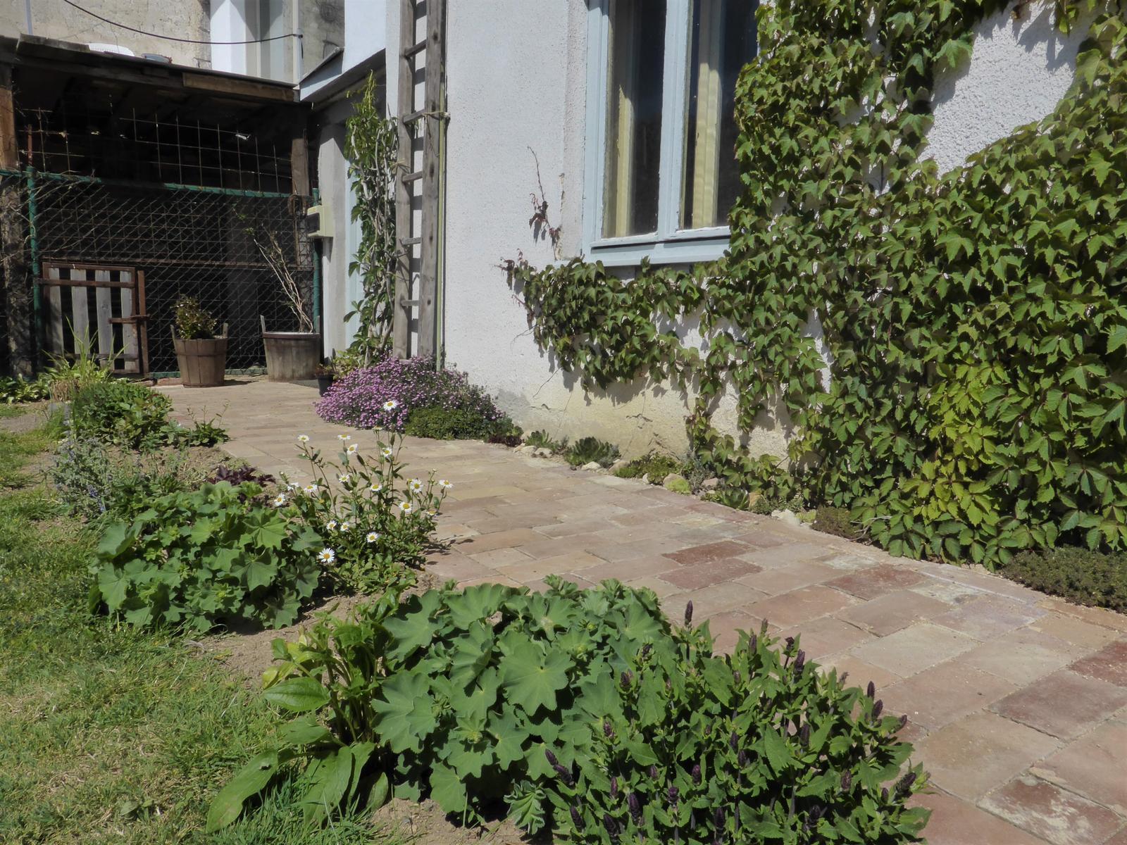 Zahrada od začátku - Obrázek č. 94