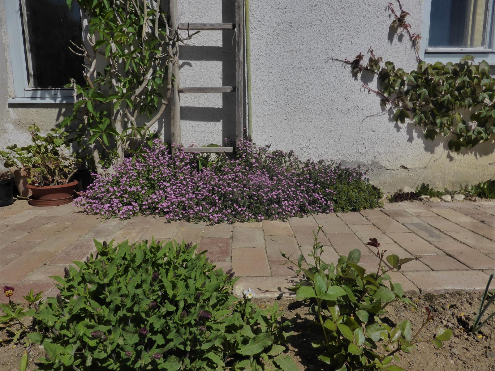 Zahrada od začátku - Obrázek č. 95