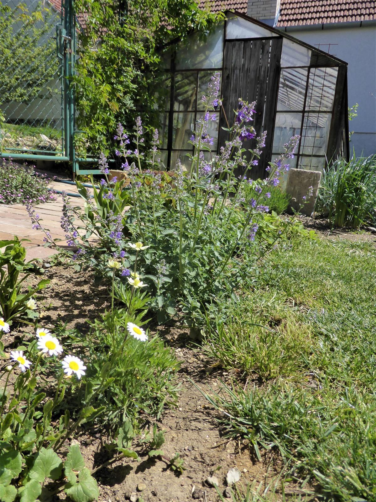 Zahrada od začátku - Obrázek č. 96
