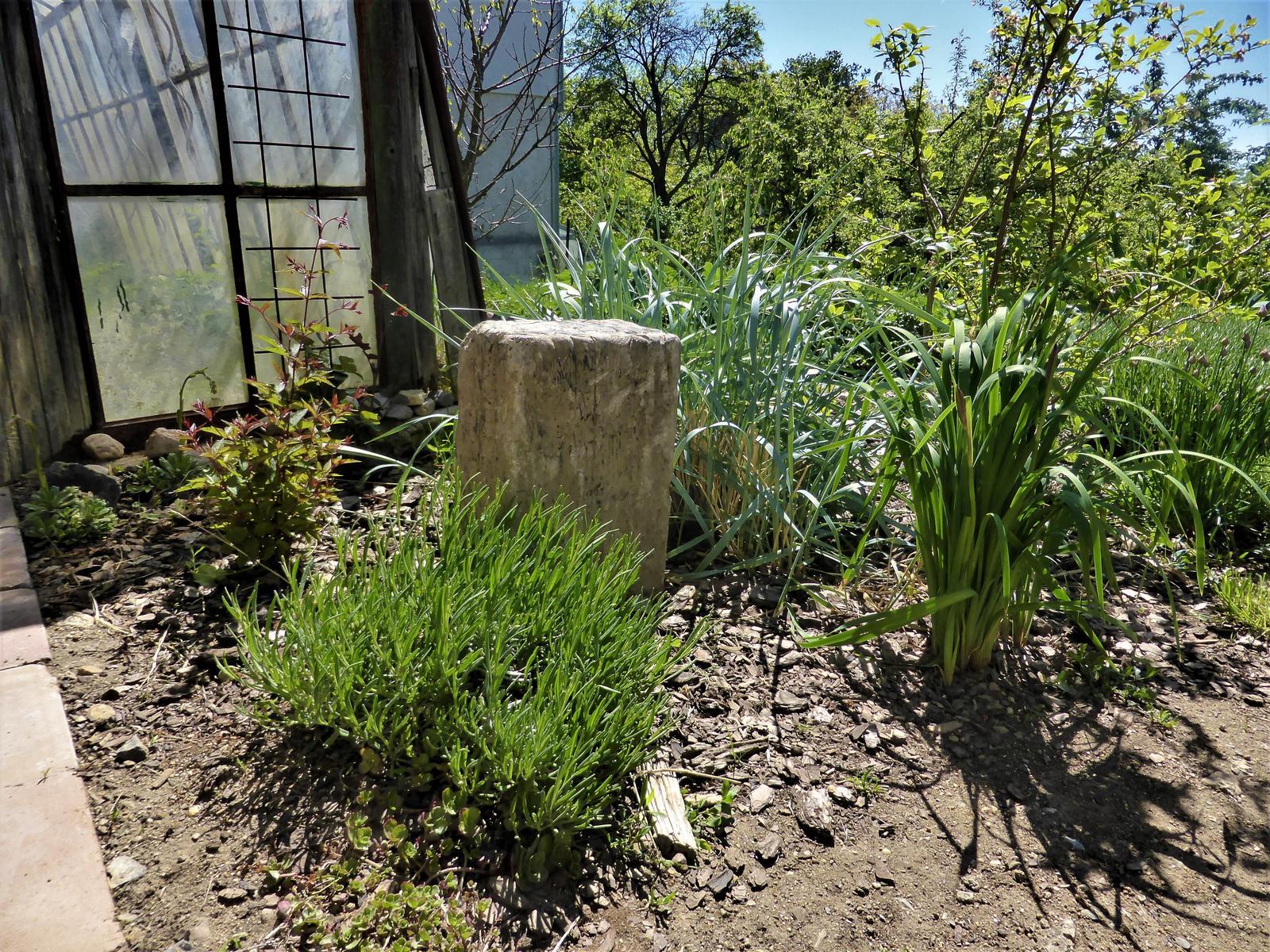 Zahrada od začátku - Obrázek č. 99