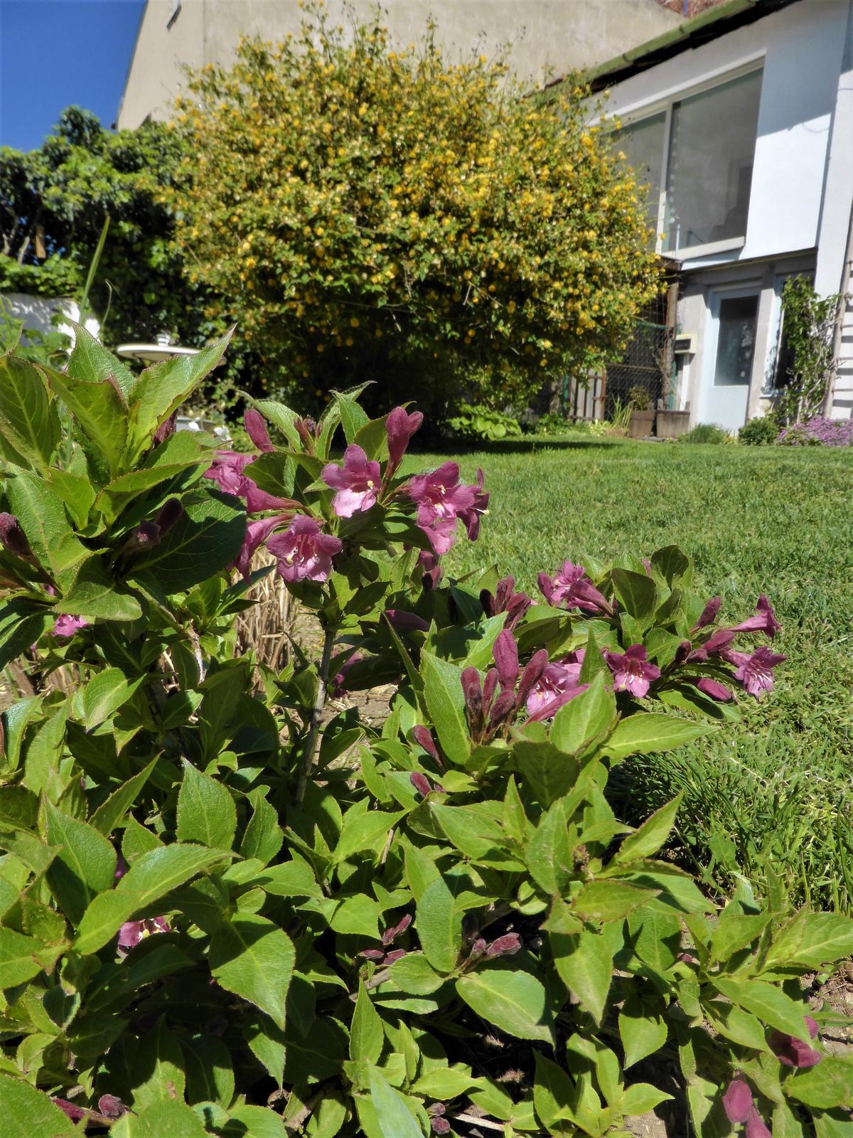 Zahrada od začátku - Obrázek č. 100
