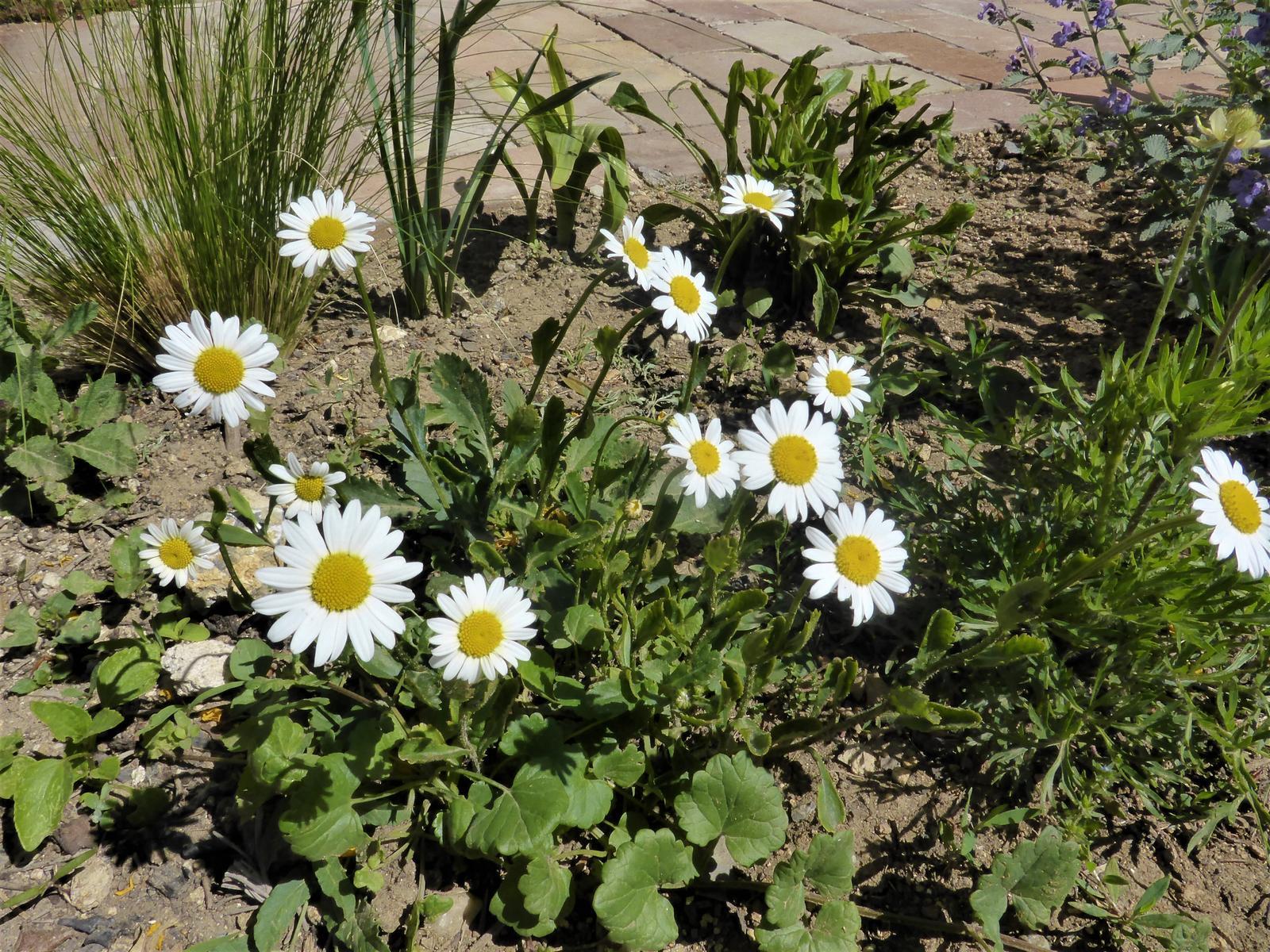 Zahrada od začátku - Obrázek č. 101