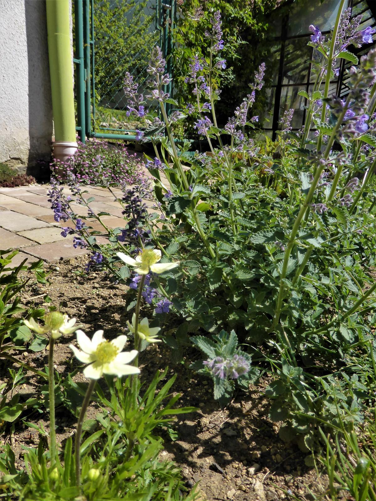 Zahrada od začátku - Obrázek č. 102