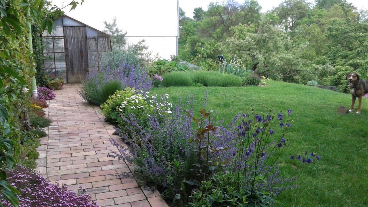 Zahrada od začátku - Obrázek č. 141