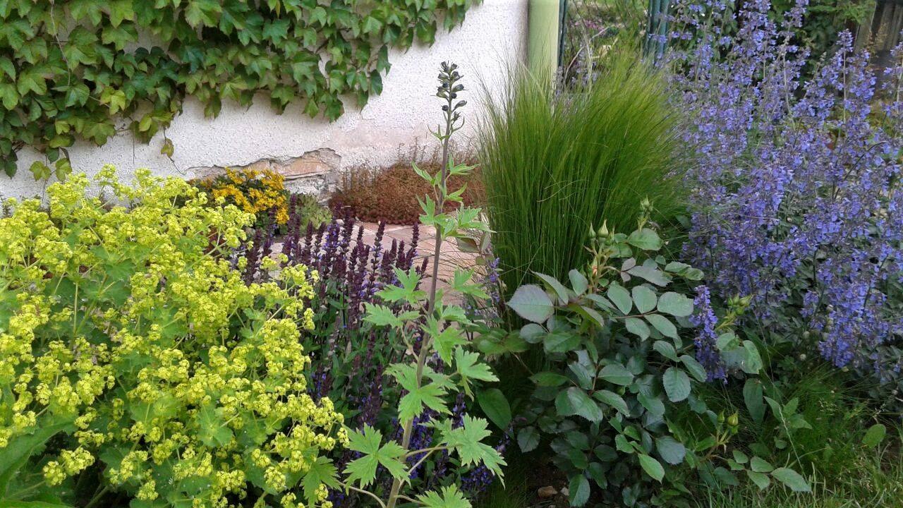 Zahrada od začátku - Obrázek č. 142