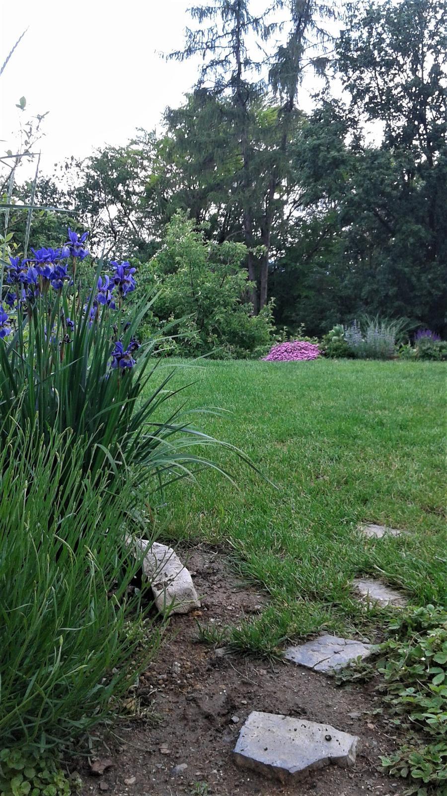 Zahrada od začátku - Obrázek č. 144