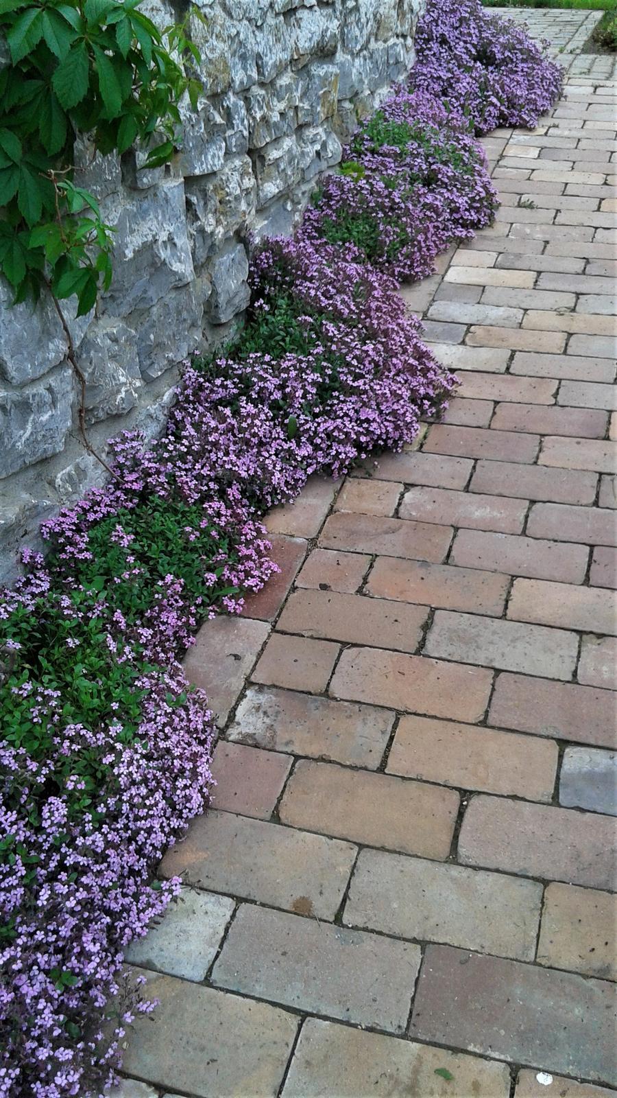 Zahrada od začátku - Obrázek č. 148