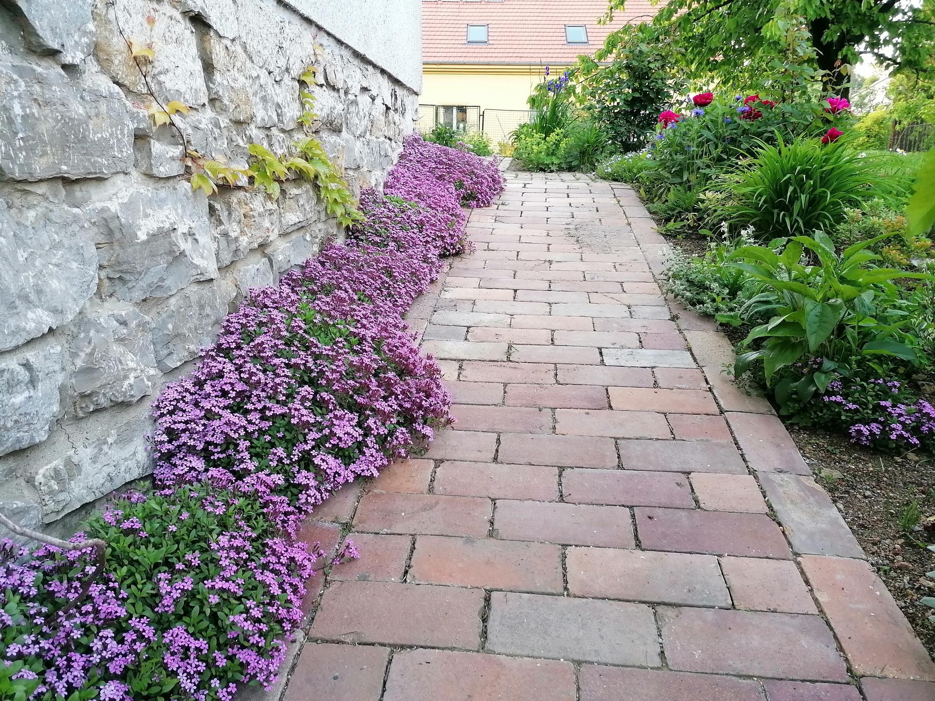 Zahrada od začátku - Obrázek č. 173