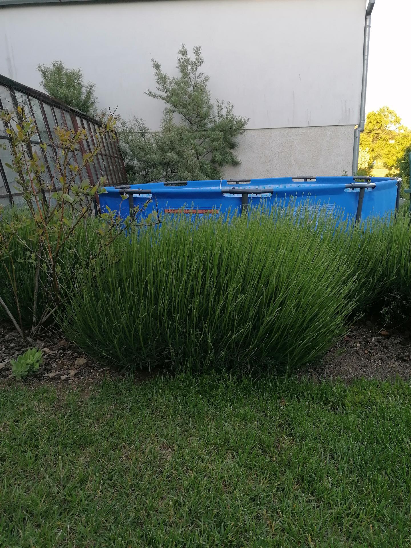 Zahrada od začátku - Obrázek č. 174