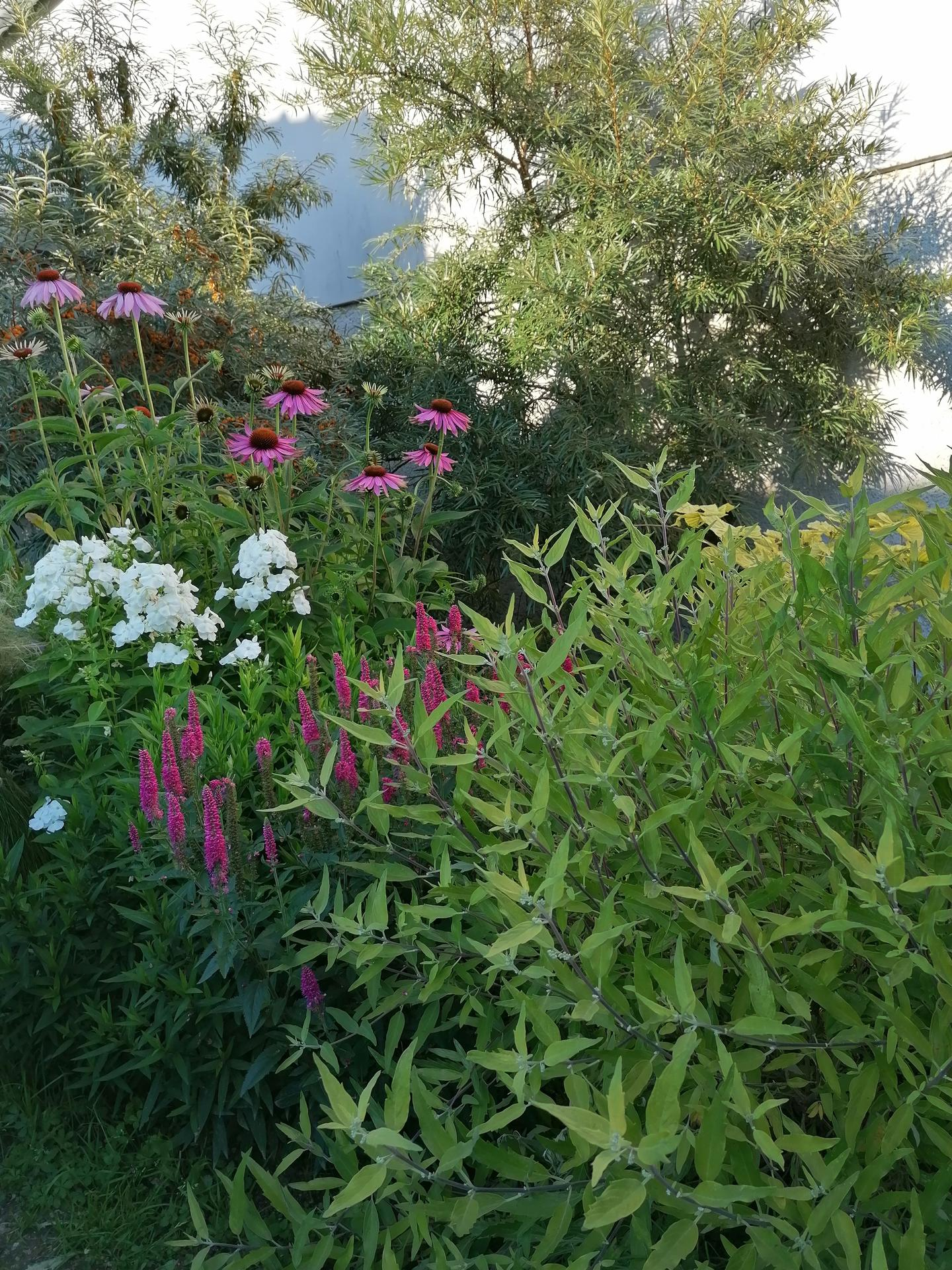 Zahrada od začátku - Obrázek č. 194