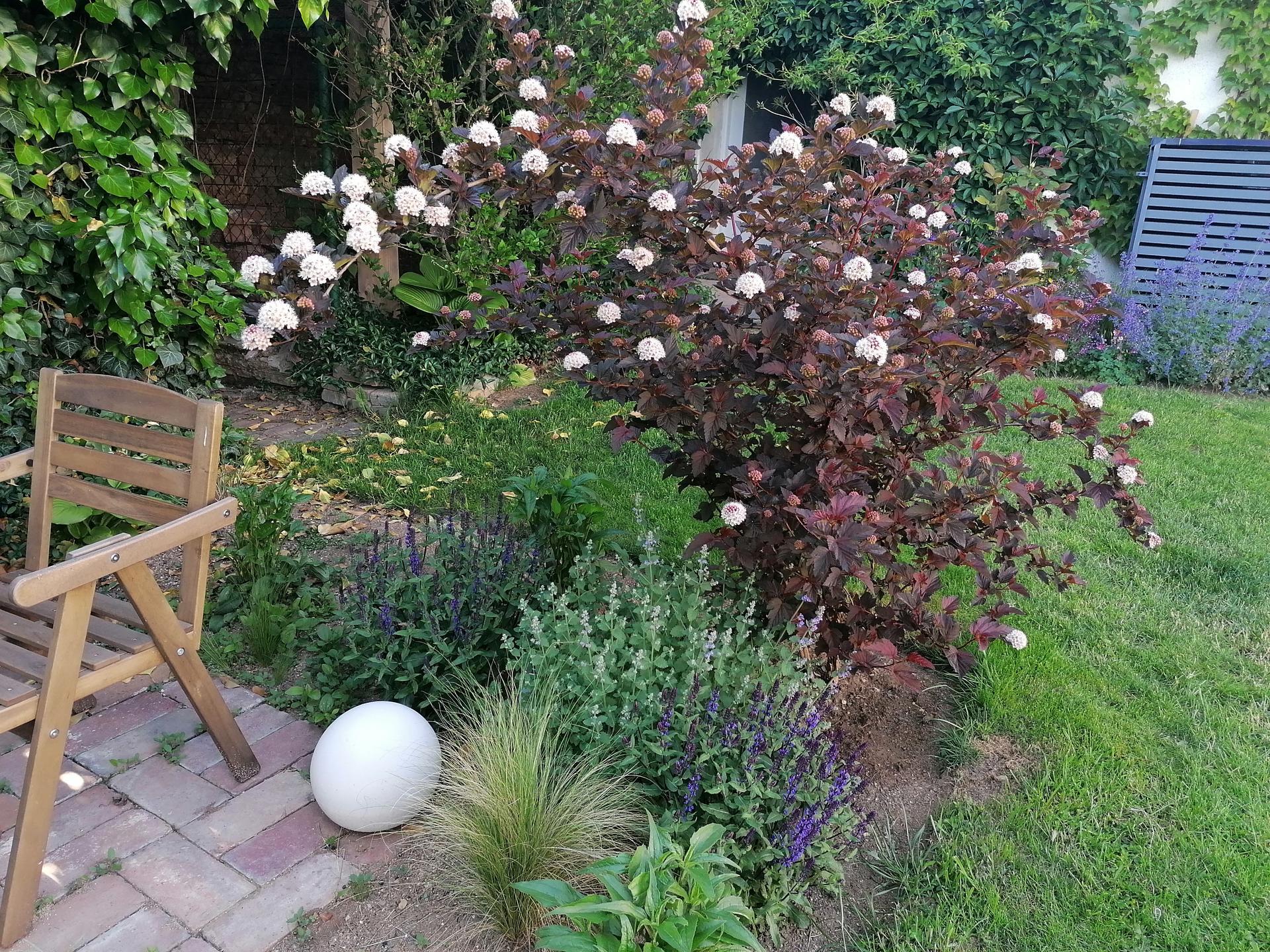 Zahrada od začátku - Obrázek č. 211