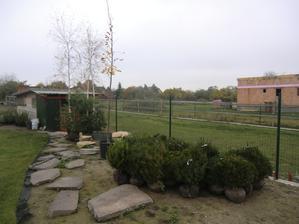 jeseň 2013: po tráve a spravení záhonov čaká 1. várka rastliniek :)))