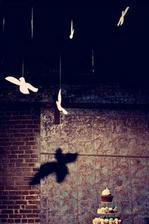 ...nemohou odolat holubičkám