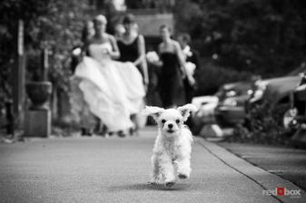 Nejdůležitější svatebčan :-)
