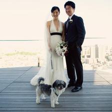 Barvu svatby udává barva pejsčího kožíšku