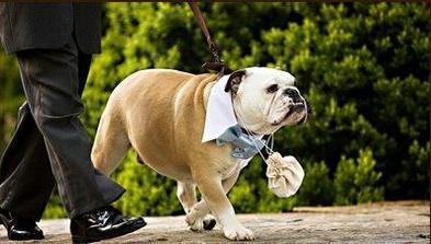 Pes s pompadůrkou