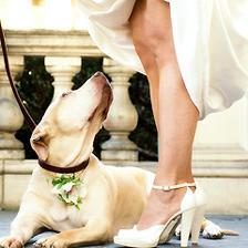 Koukat nevěstě pod sukni může jen ženich a družice :-)