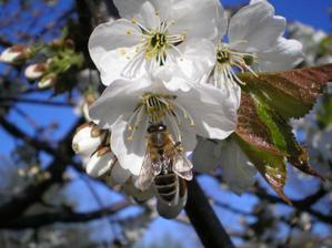 Pilná včelka :)