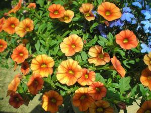 Krásná oranžovo - měděná barvička