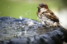 Pítko pro ptáky na zahradu - ideálně vlastní výroba