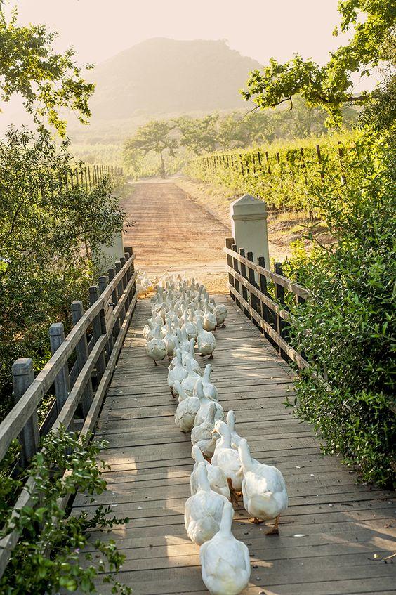 Život na farmě :-) - Obrázek č. 13