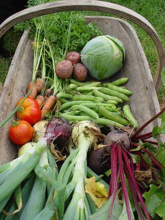 Život na farmě :-) - Obrázek č. 15