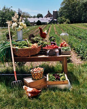 Život na farmě :-) - Obrázek č. 18
