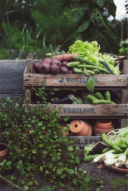 Život na farmě :-) - Obrázek č. 29